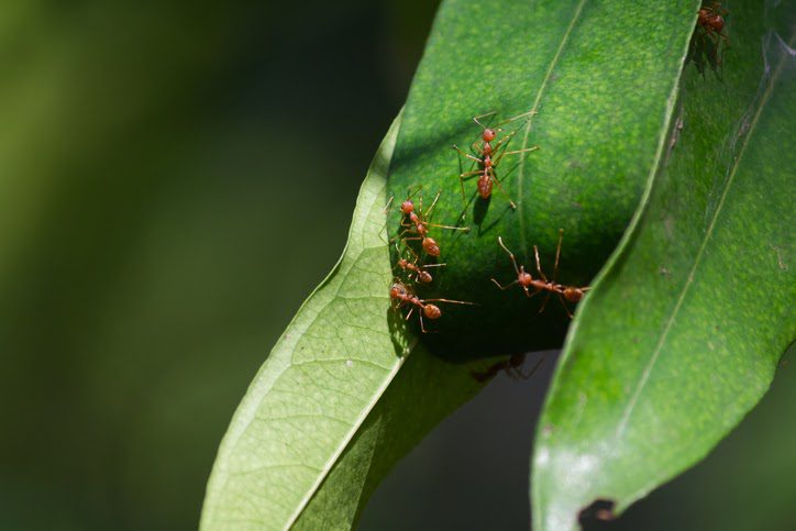 All uses of Heptachlor have been canceled, except when used for the purpose of controlling fire ants in specific situations
