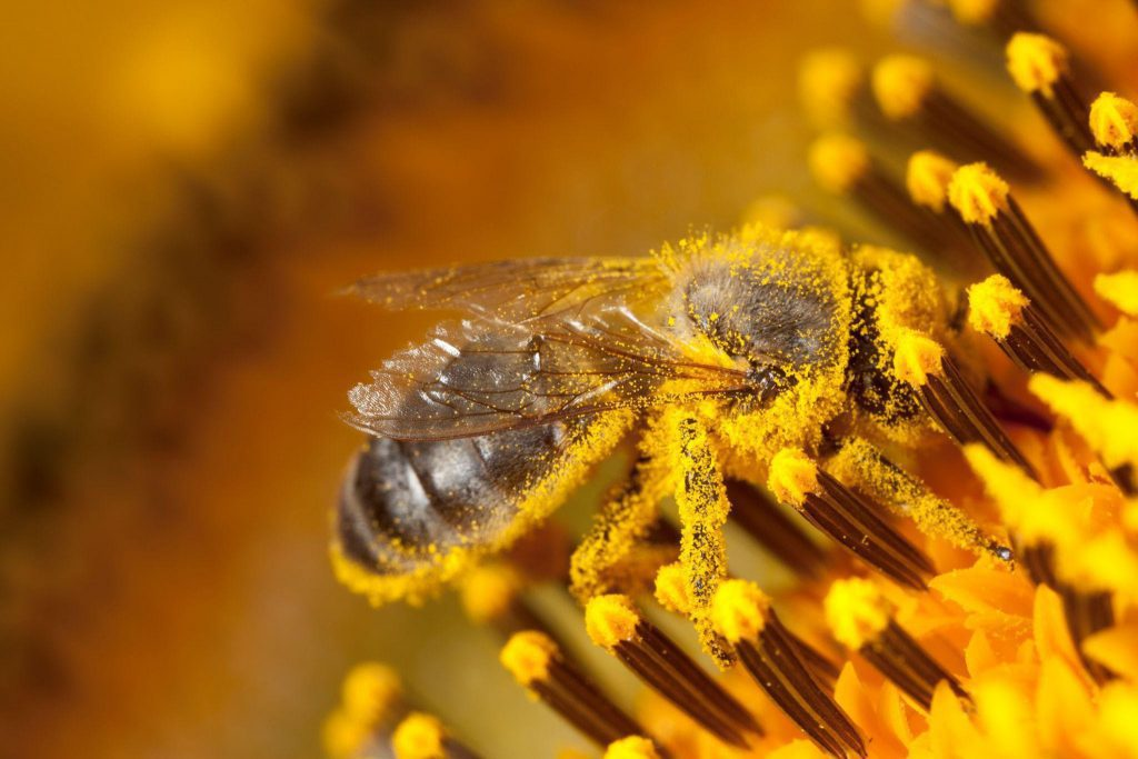 Each flower will result in honey with a specific taste, colour, and texture.